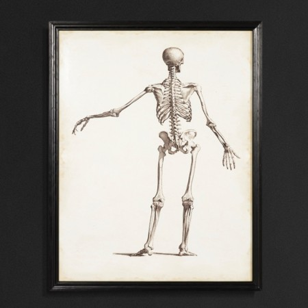 Skeleton Wall Art