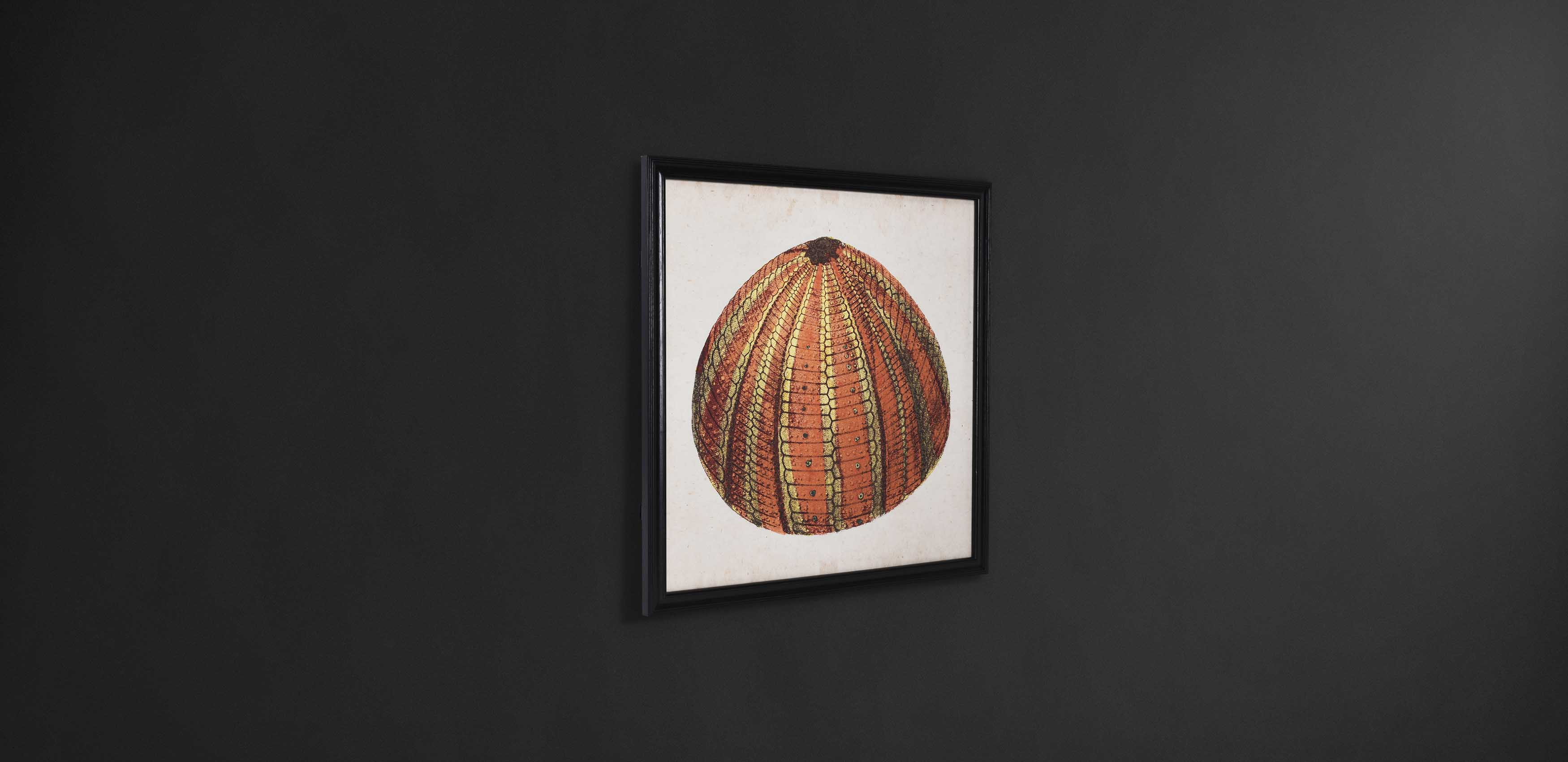 Urchin Wall Art | Timothy Oulton